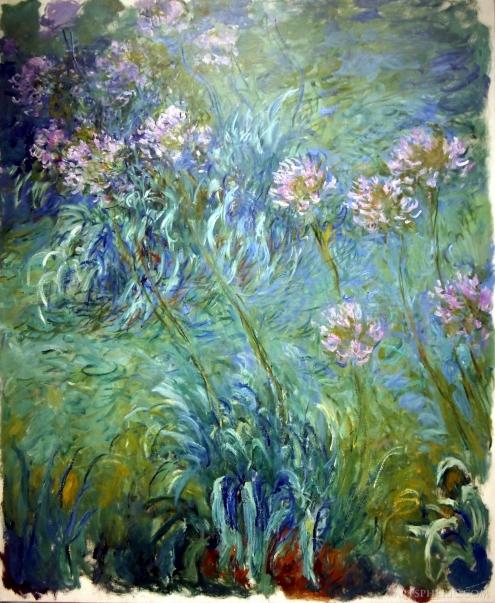 Agapanthus Claude Monet 1914-1926